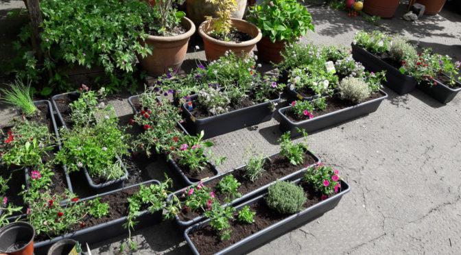 Blumenkästen für Insekten 2021